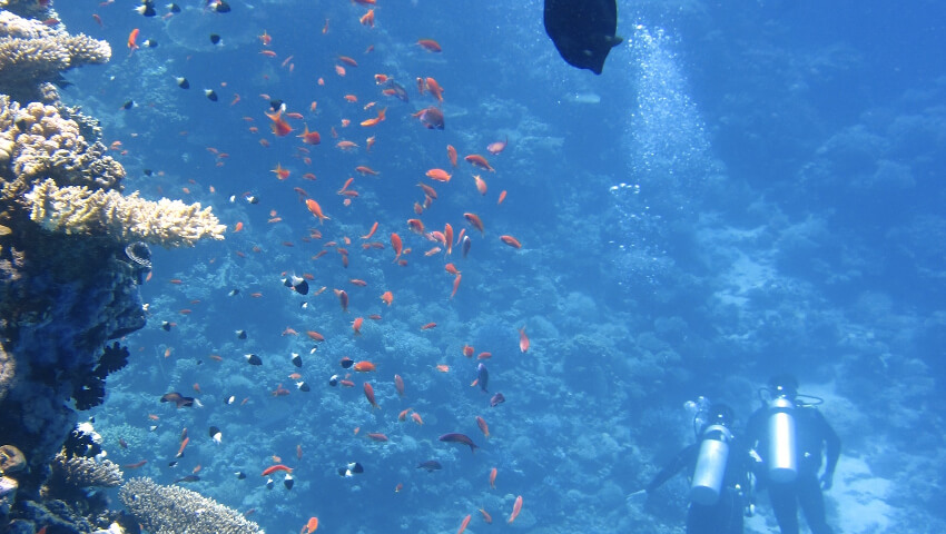 cursos de pesca submarina